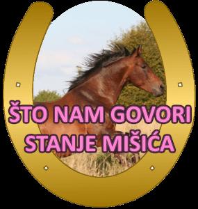 misici konja